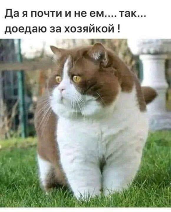 http://forumimage.ru/uploads/20191028/157229981421273964.jpg