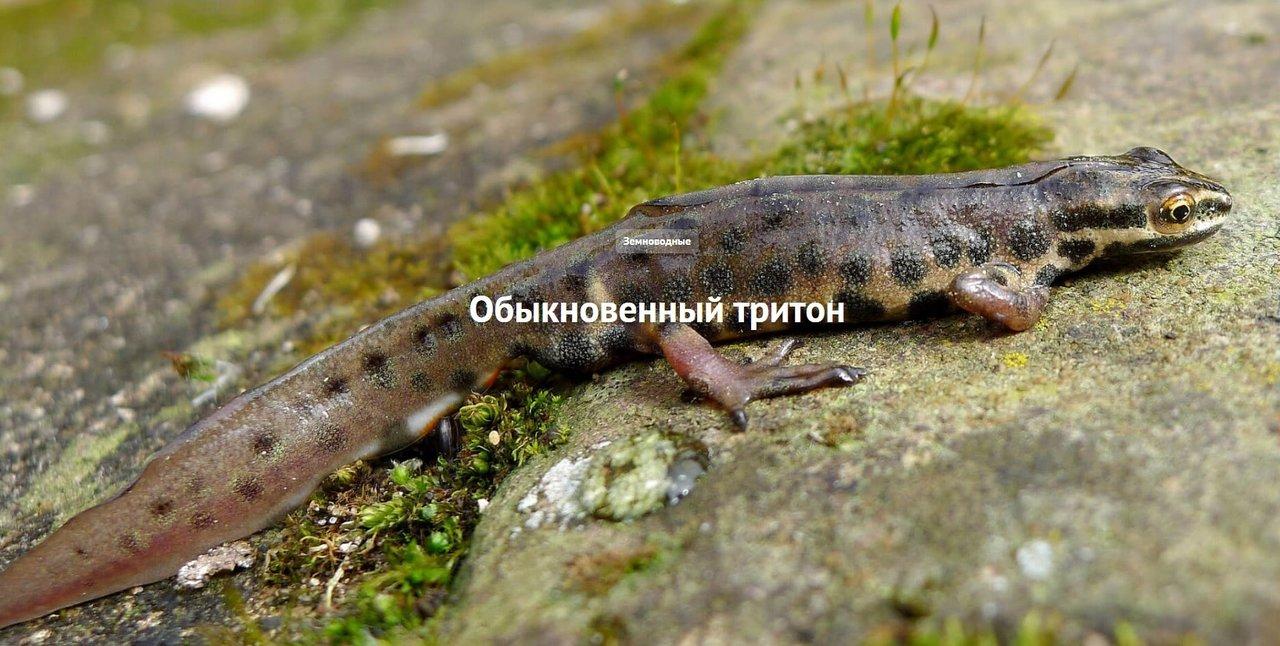 http://forumimage.ru/uploads/20191122/157444269066611598.jpg