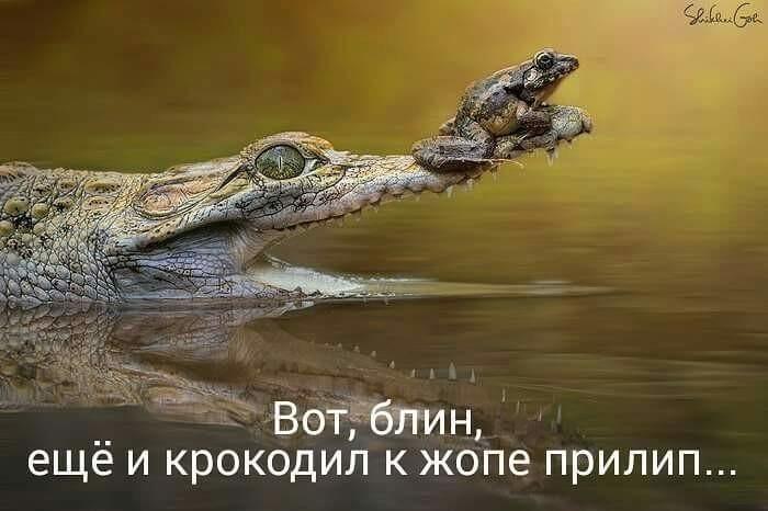 http://forumimage.ru/uploads/20191206/15756444094570222.jpg