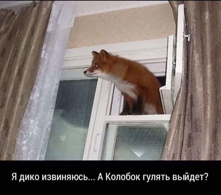 http://forumimage.ru/uploads/20191213/157620147223671845.jpg