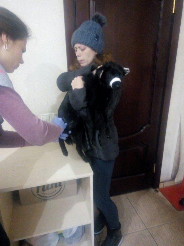 Фин.отчет по бездомным кошкам,собакам и стерилизация.