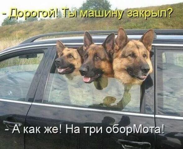 http://forumimage.ru/uploads/20200301/158308191308062580.jpg