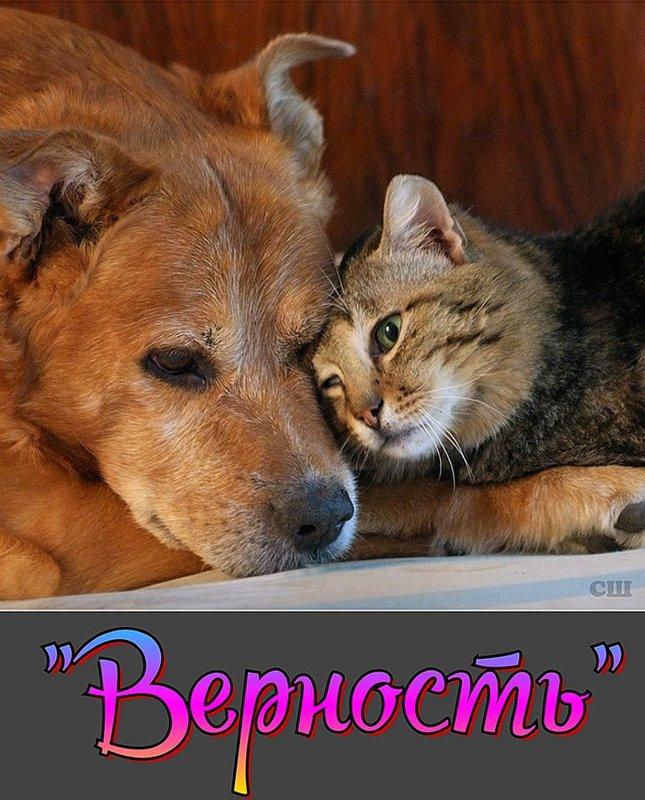 http://forumimage.ru/uploads/20200502/15884115287634181.jpg