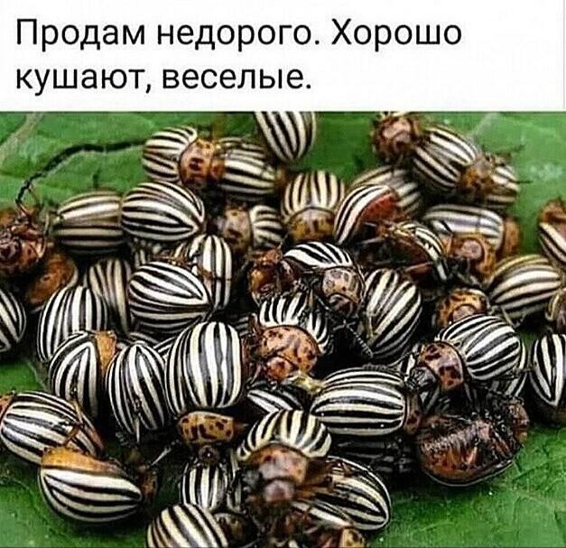 http://forumimage.ru/uploads/20200706/1594067491554953100.jpg