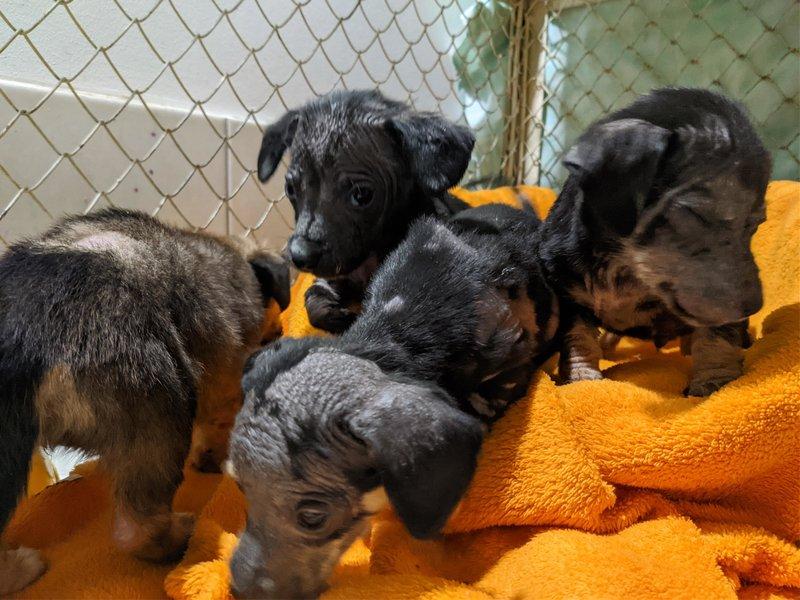 Re: Финансовый отчет брошенных щенков с Ласточки
