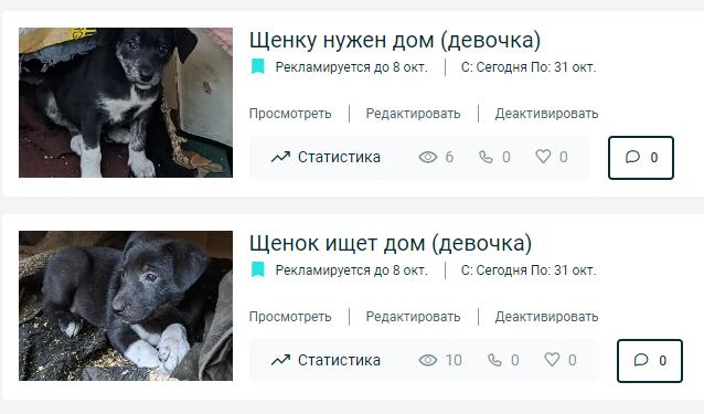 ти щенков. • Финансовые отчеты животных ВОЛОНТЕРОВ