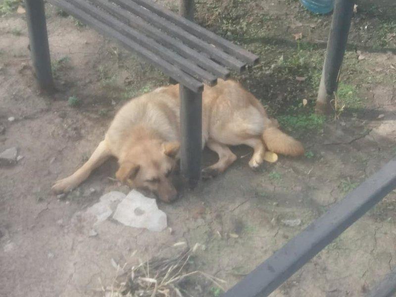 пес с кладбища • Фин. отчеты
