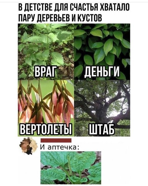 http://forumimage.ru/uploads/20201119/160574431172498416.jpg