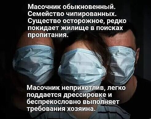 http://forumimage.ru/uploads/20201120/16058360277373147.jpg