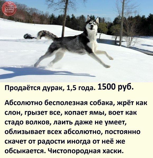http://forumimage.ru/uploads/20201125/160629689132071364.jpg