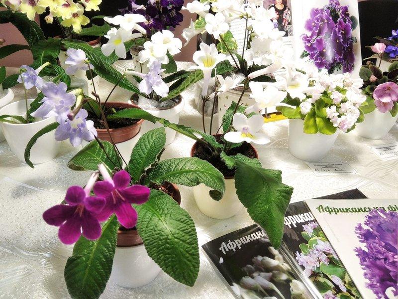 23-26 сентября выставка фиалок и др.комнатных растений