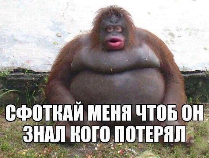 http://forumimage.ru/uploads/20170207/148645733649024797.jpg