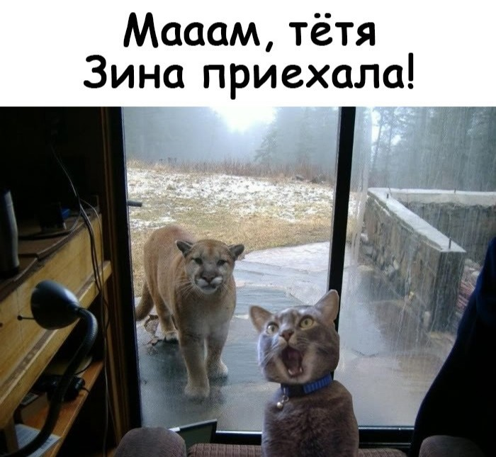 http://forumimage.ru/uploads/20190125/154842024122139510.jpg
