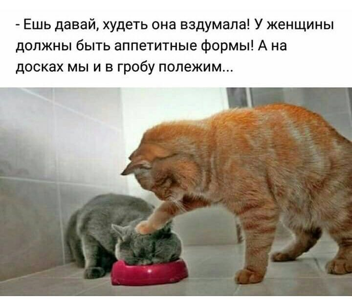 http://forumimage.ru/uploads/20190204/154928954011284180.jpg