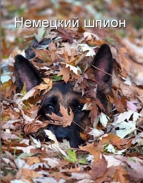 http://forumimage.ru/uploads/20190926/156950894308412632.jpg