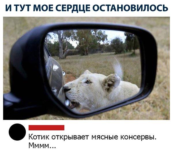 http://forumimage.ru/uploads/20191004/157020763827912981.jpg