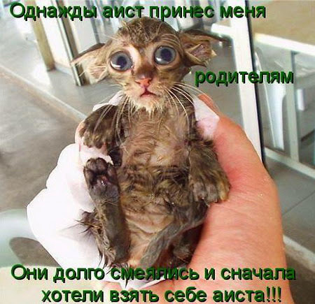 http://forumimage.ru/uploads/20210723/162704299233292070.jpg