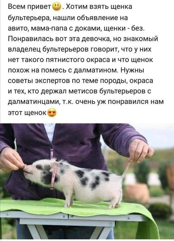 http://forumimage.ru/uploads/20210827/163008351802257412.jpg