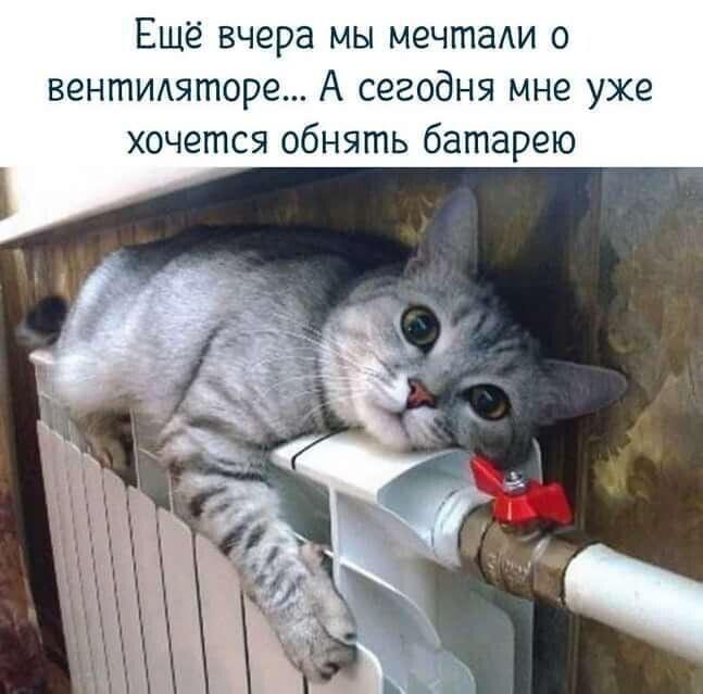 http://forumimage.ru/uploads/20210911/163138822257757682.jpg