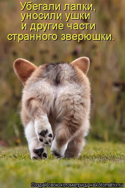 http://forumimage.ru/uploads/20210911/16313882229189313.jpg